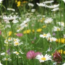 Neutral Meadow Mix (1 gram)