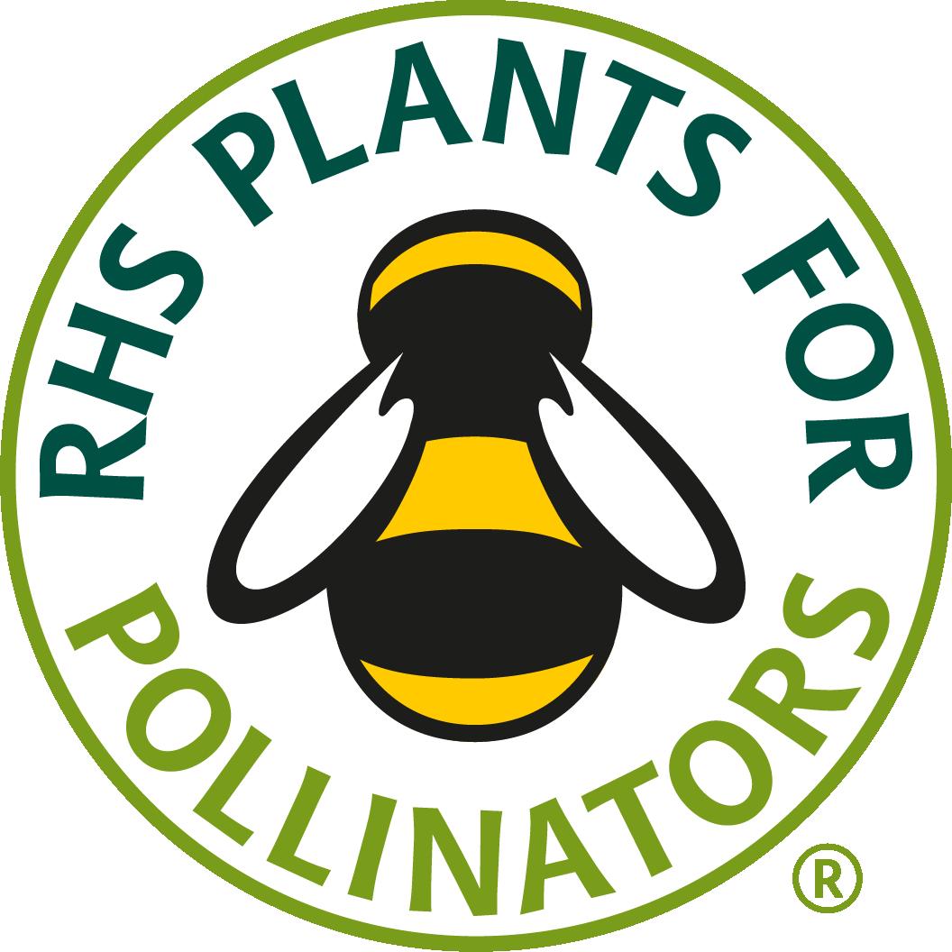 Pollinators 40 Plug Plants Mix